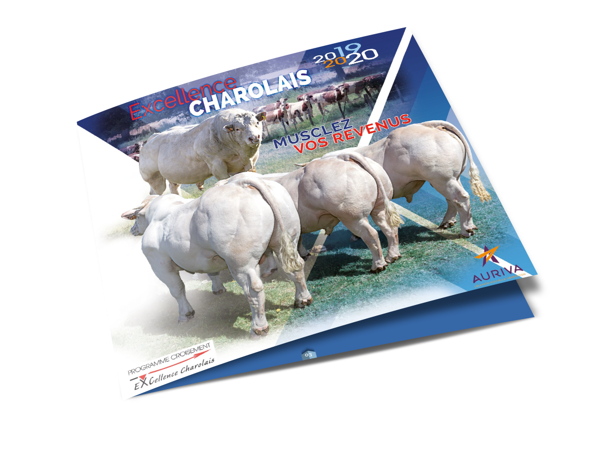 catalogue Excellence charolais